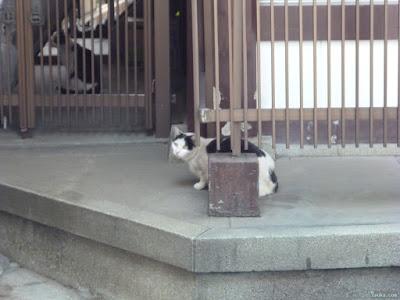 三光神社の猫