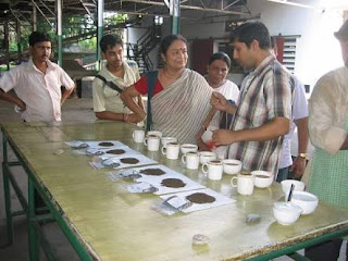 Tea testing career