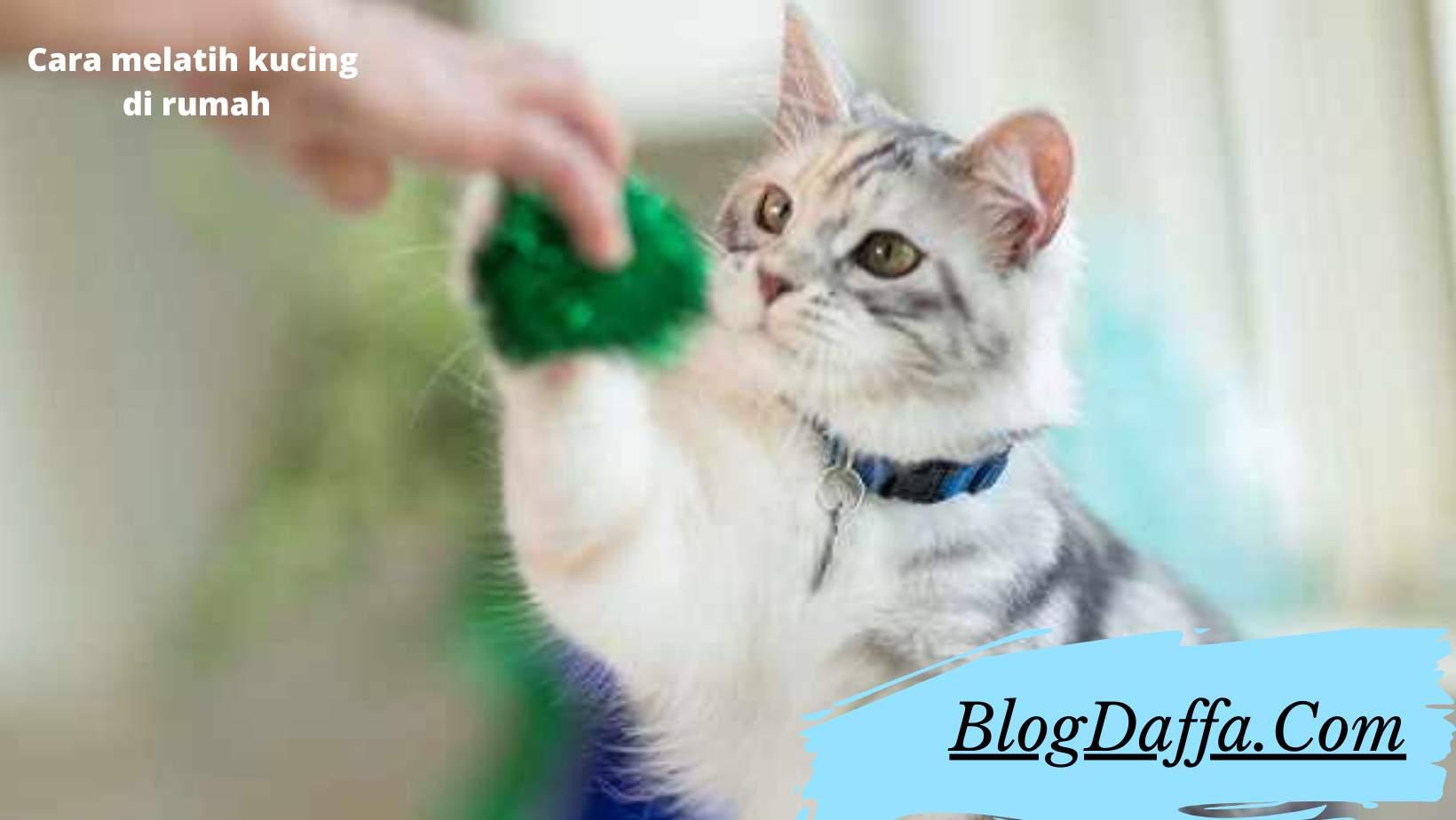 Cara melatih kucing yang sudah terbukti berhasil
