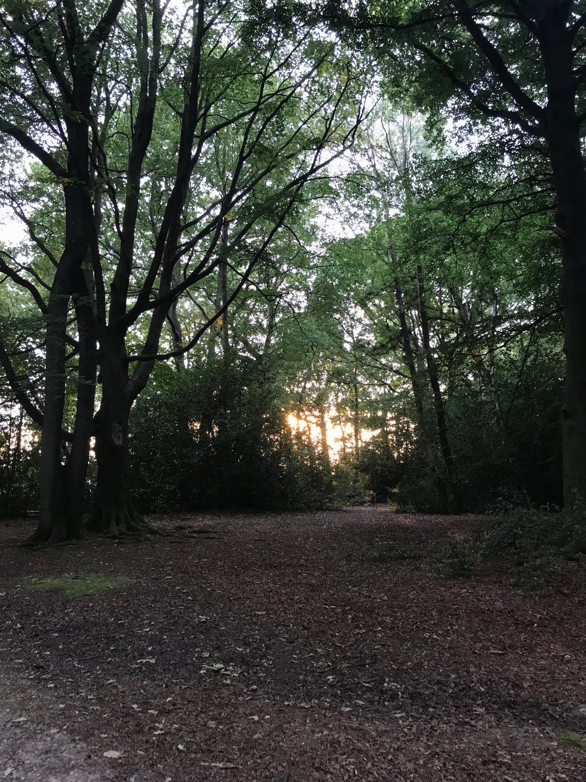 Sun shining through woods
