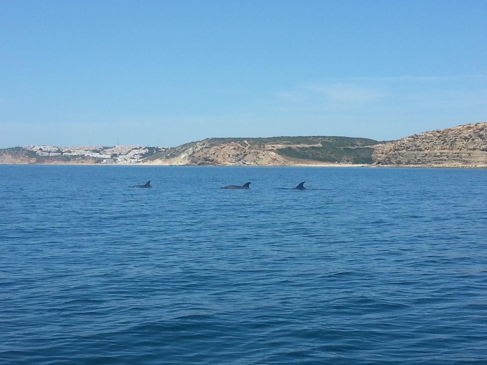 Dolfijnen spotten in Sagres