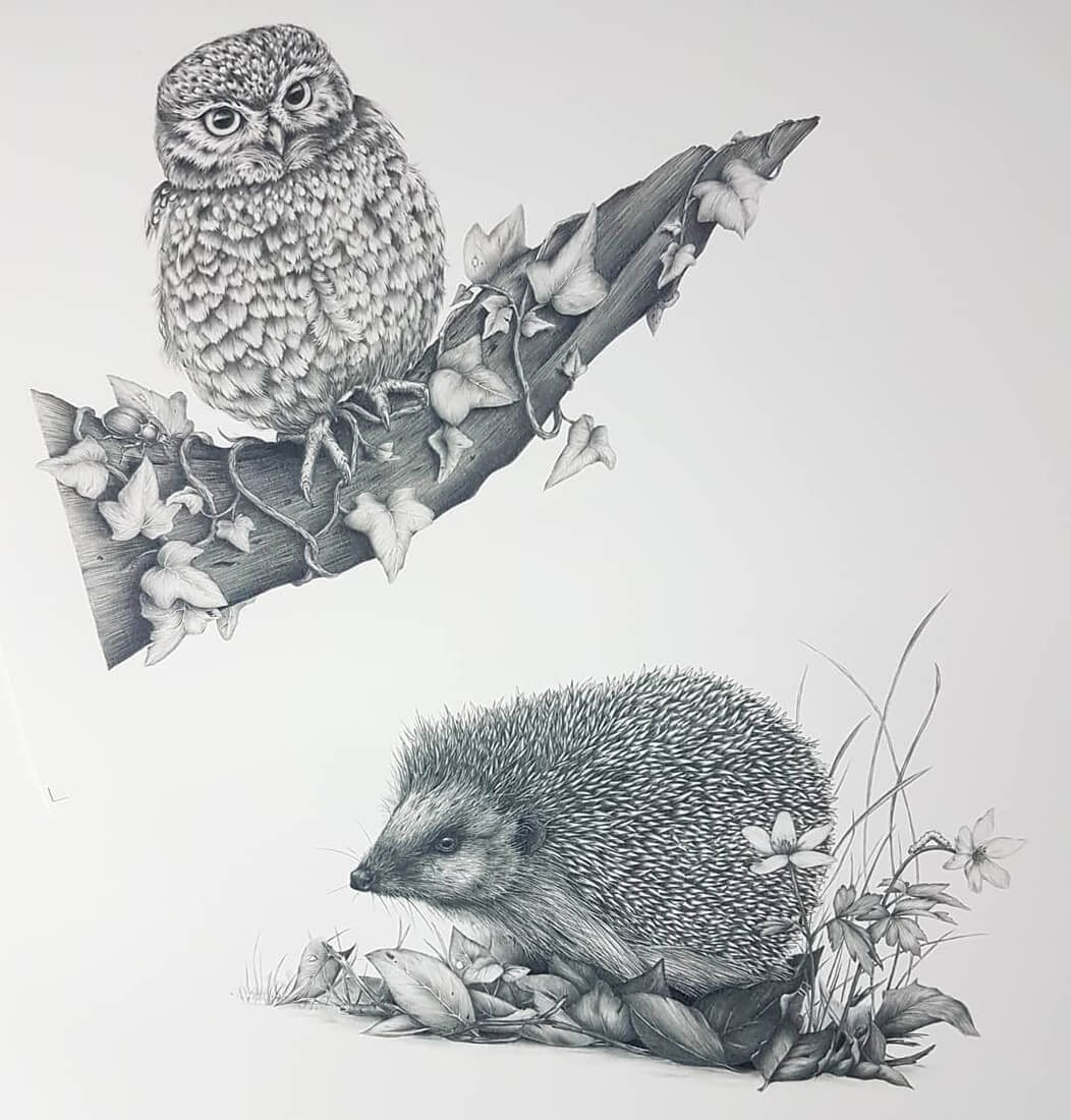 09-The-Owl-and-the-Hedgehog-Kerry-Jane-Detailed-Black-and-White-Wildlife-Drawings-www-designstack-co
