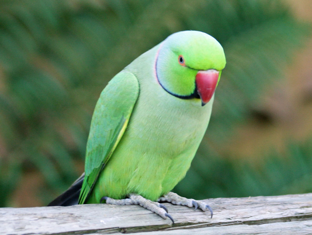 green bird great animal - photo #34