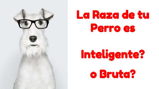 Inteligentes y tontos