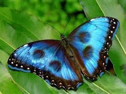sueño-con-mariposa-que-numero-jugar-en-la-loteria