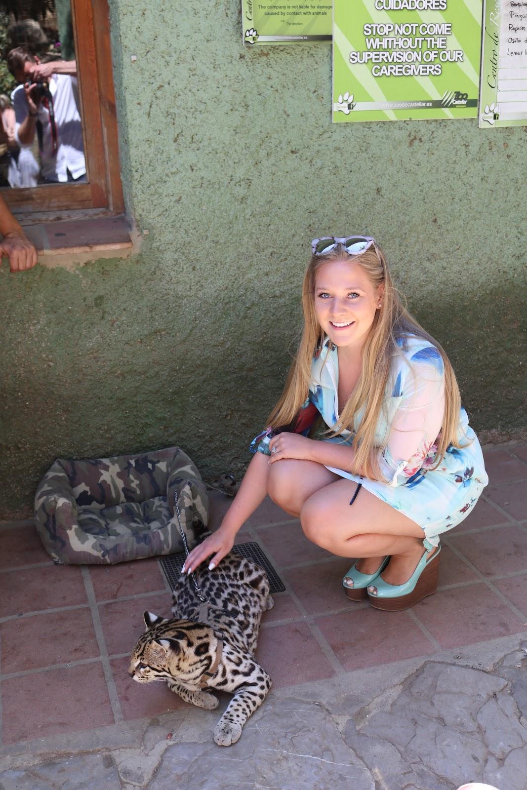 Blonde Girl, Katie Heath, wearing a Quiz Blue shirt dress with an Ocelot in zoo de Castellar, Spain