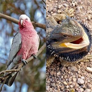 Olah Si Kadal dan Galah Si Burung