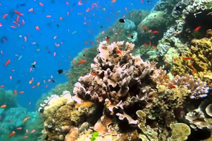 Jurnal Restorasi Terumbu Karang Setelah Bom Ikan di Indonesia