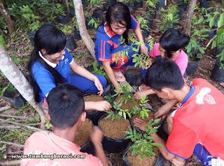 Menanam pohon untuk remaja