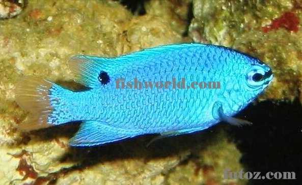 Marine Ornamental Fish Type | FISH WORLDs.com