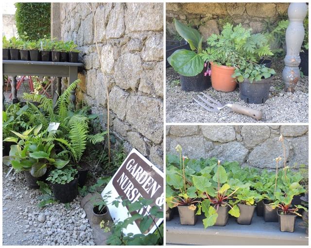 June Blake's Garden Nursery