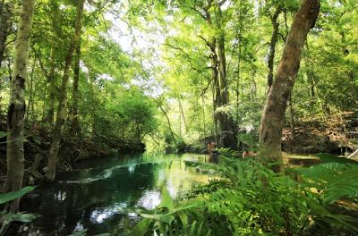 4. Mitos : Banyak Seranga Bermakna Dekat Sumber Air