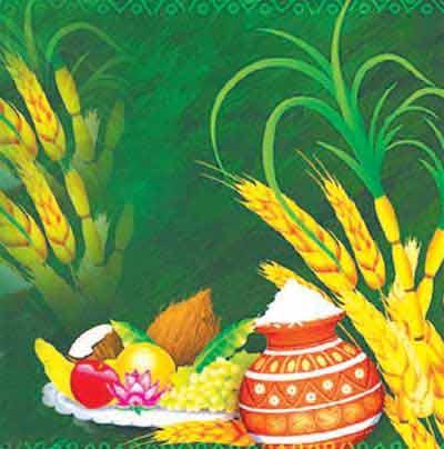 Telugu Sankranthi Festival
