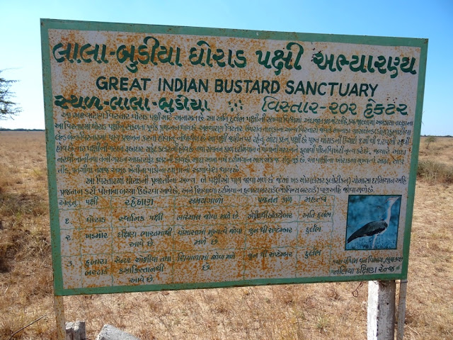 Kutch Great Indian Bustard Sanctuary