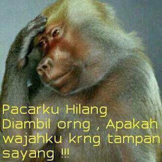 Monyet Patah Hati Inilah 15 Gamba...
