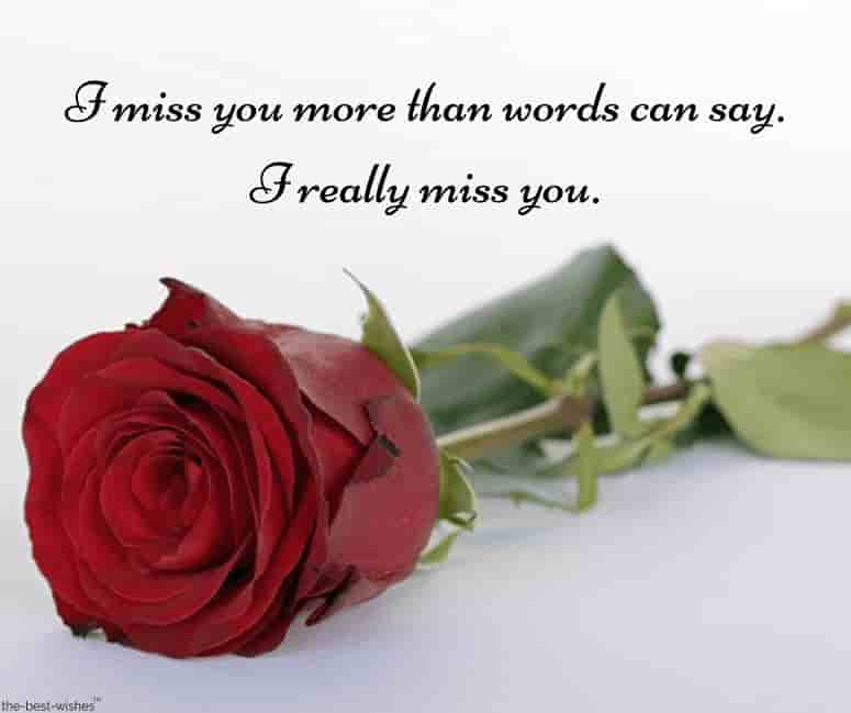 i miss you text message for him with red rose