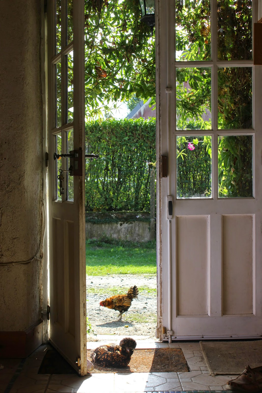Chickens at the kitchen door