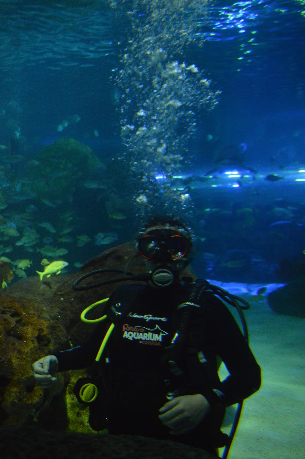 Discovery Dive at Ripley's Aquarium of Canada in Toronto, Ontario
