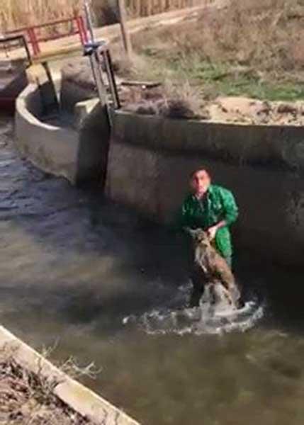 La Guardia Civil busca a un hombre que golpeó y ahogó a un jabalí