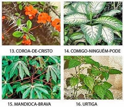 plantas venenosas enciclop dia global