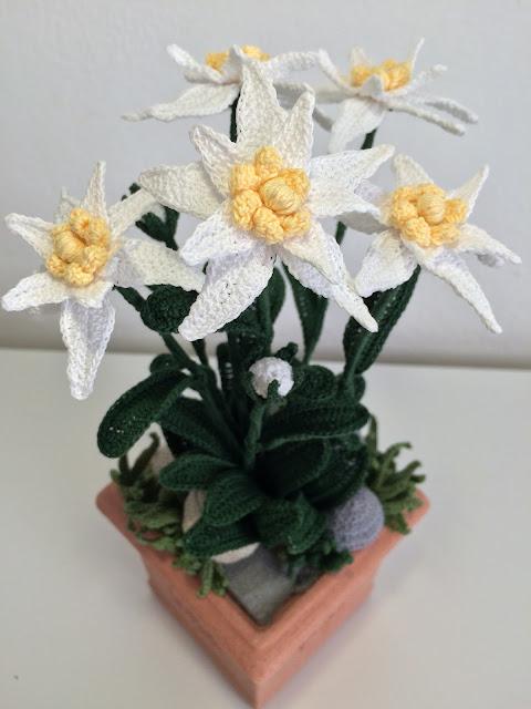 Il blog di sam how to crochet a edelweiss for Il blog di sam piante grasse