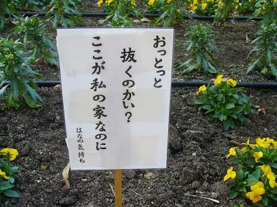 寝屋川公園の花壇