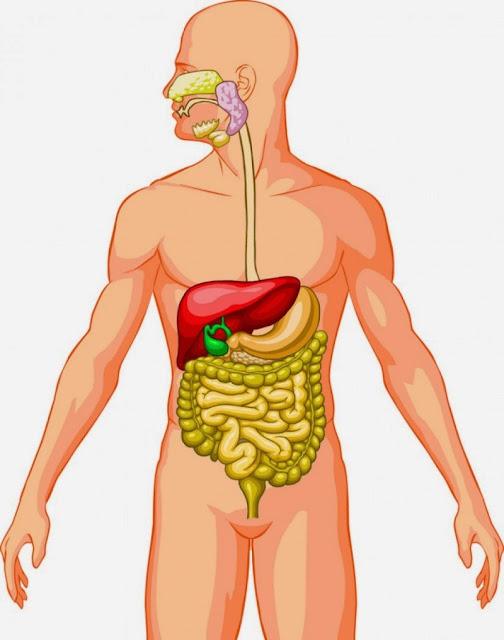 Vinagre de manzana para la digestión