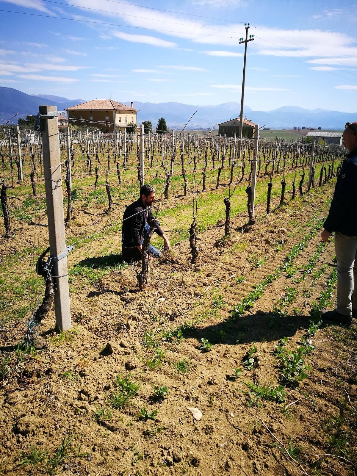 Periodo Migliore Per Potare Quercia wine blog roll - il blogger del vino italiano: aprile 2019