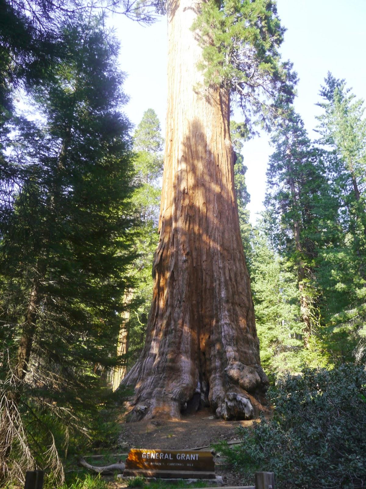 遊記: Sequoia National Park 紅杉國家公園