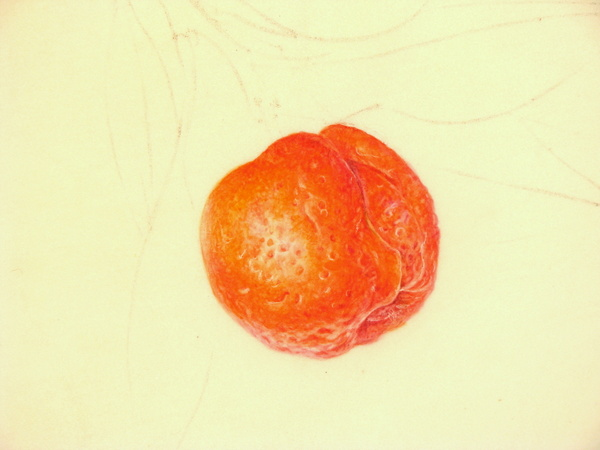 Botanical Sketches and Other Stories: February 2014