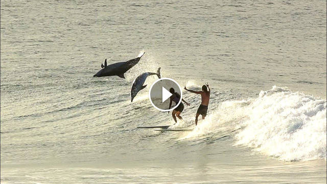 Surfing With Dolphins 2