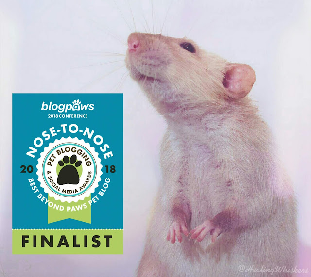 BlogPaws Nose-to-Nose Awards - Best Beyond Paws Pet Blog Finalist
