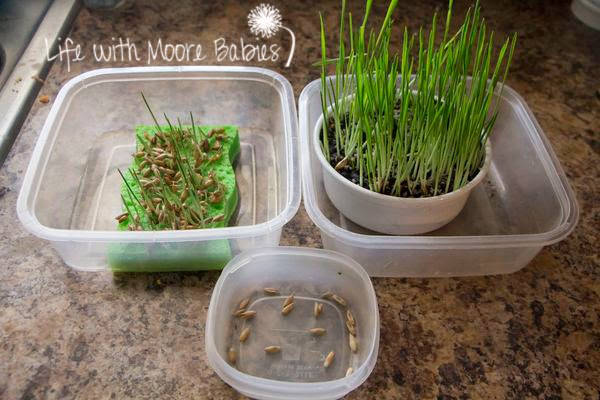 What plants need to grow experiment