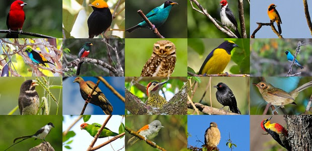 Iguazu Falls Brazil Wallpaper Bio Orbis Aves Do Brasil A Vis 227 O Dos Ornit 243 Logos