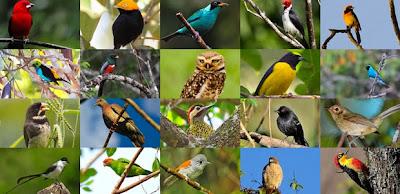 https://bio-orbis.blogspot.com.br/2014/03/aves-do-brasil-visao-dos-ornitologos.html
