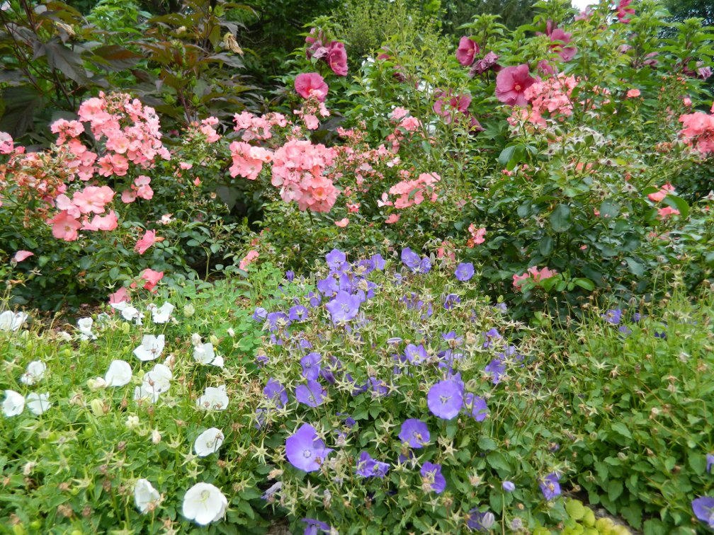 James Gardens late summer pastels by garden muses- a Toronto gardening blog