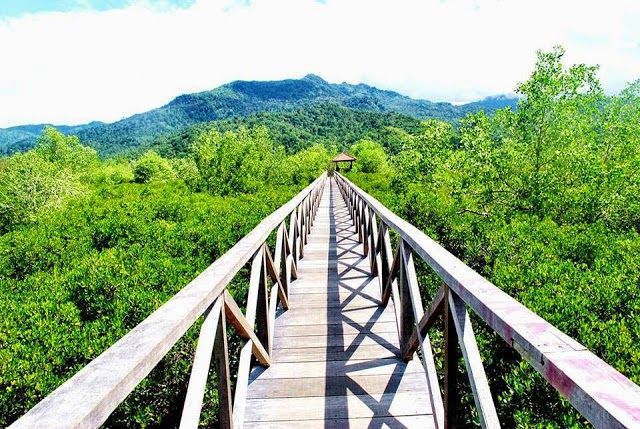 Wisata Taman Mangrove Cengkrong Prigi