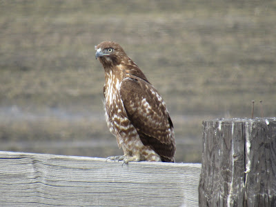 Tule Lake National Wildlife Refuge northern California birds of prey