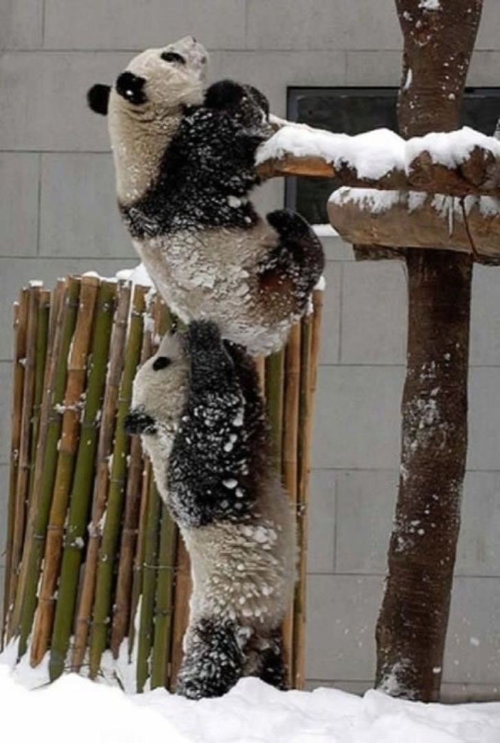 21 Amusing Pictures Depict Animals Mastering The Art Of Teamwork