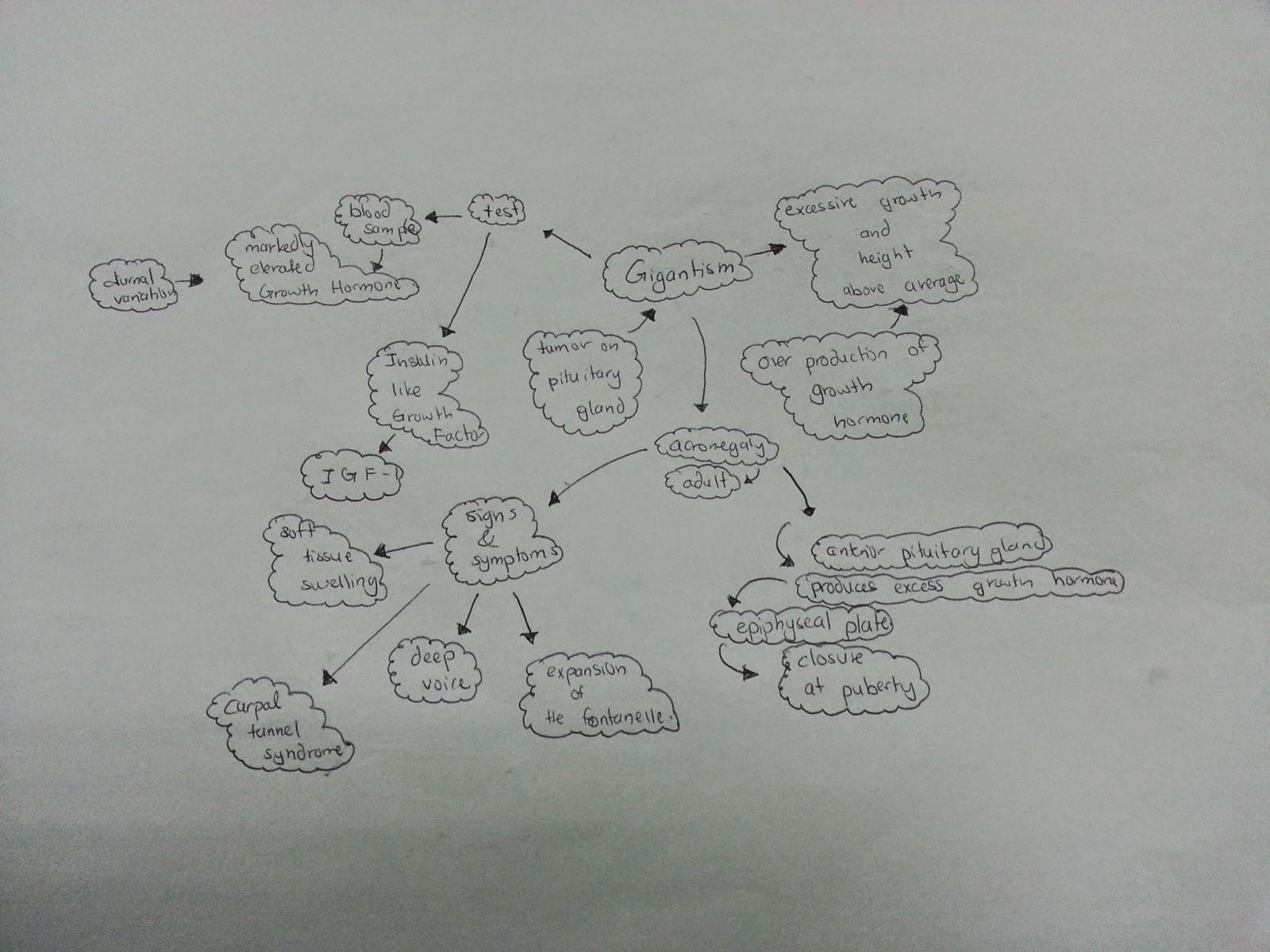 Medical Concept Maps Endocrine System