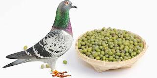 Kacang Hijau Untuk merpati