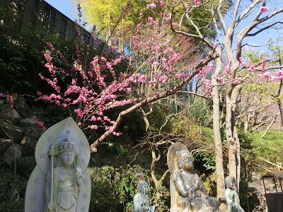 長谷寺のハナモモ