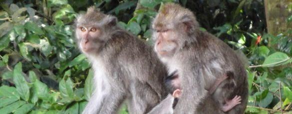 Ubud Bali Art Village & Holy Monkey Forest - Tohpati, Batubulan, Celuk, Mas, Ubud, Village, Gianyar, Bali, Indonesia