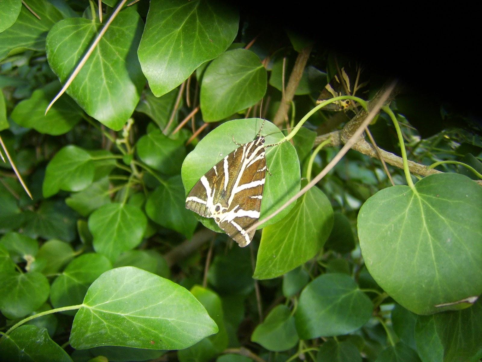 Πάρος Κοιλάδα με τις Πεταλούδες