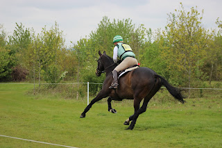Dark bay horse being ridden at gallop on a cross country course