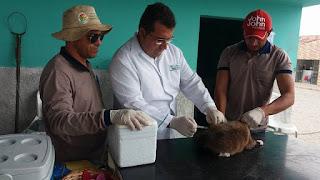 Secretaria de Saúde realizou dia 'D' da vacinação para cães e gatos em Baraúna