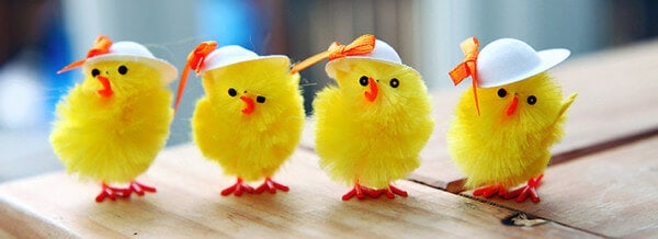 Cute-Chickens-Facebook-Cover-Photo