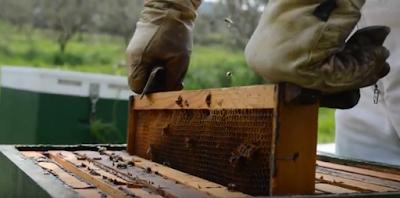Ανάπτυξη μελισσιών με σφήνες ανάμεσα στον γόνο VIDEO