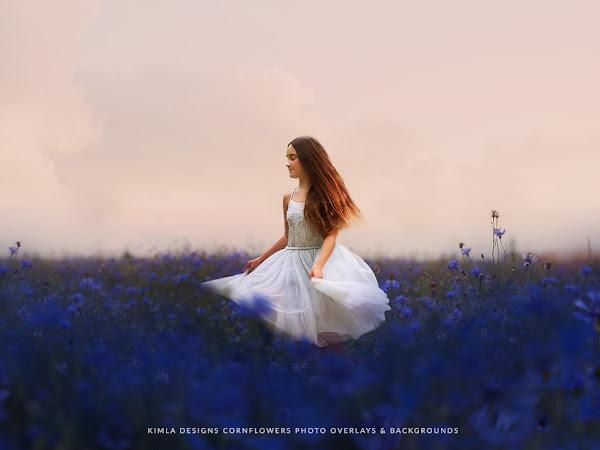 Blue Cornflowers ~ What's New