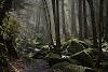 Cantiknya.. Ini Dia 5 Hutan Paling Indah Di Dunia!.
